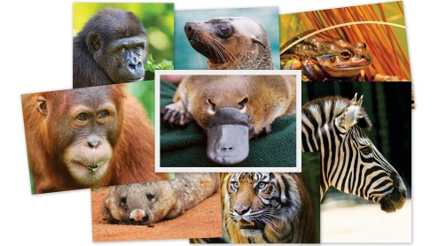 actwild_8animals_collage_5120x2880