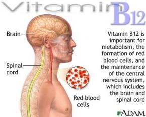 Vitamin B12 Vegans