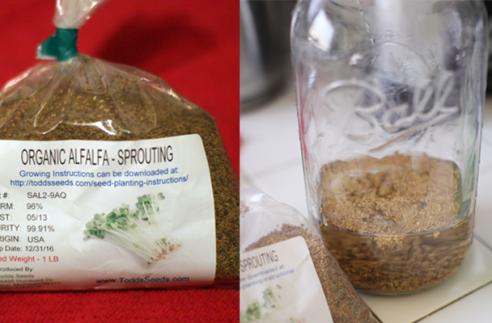 alfalfa-seeds
