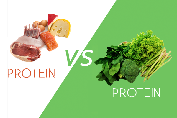 animal protein vs plant based protein