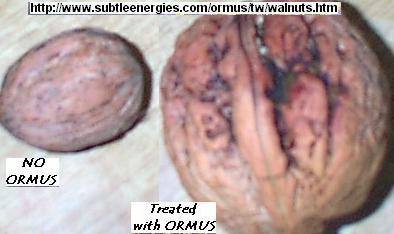walnuts_ormus_fertilizer